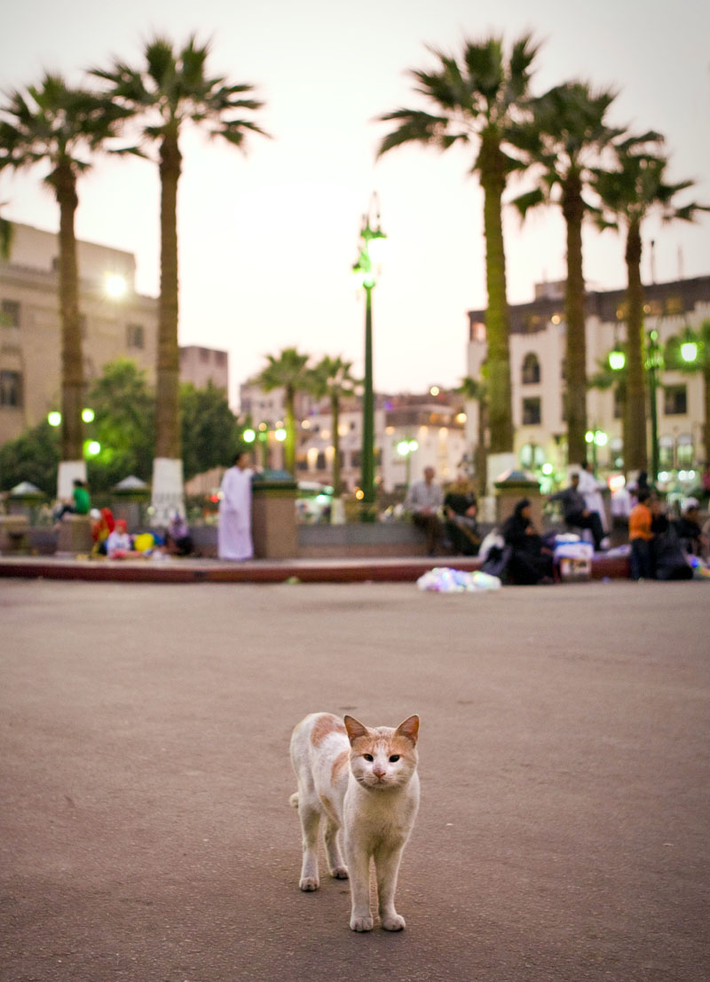 Cairo Cat. Photo by Zandy Mangold. © 2009