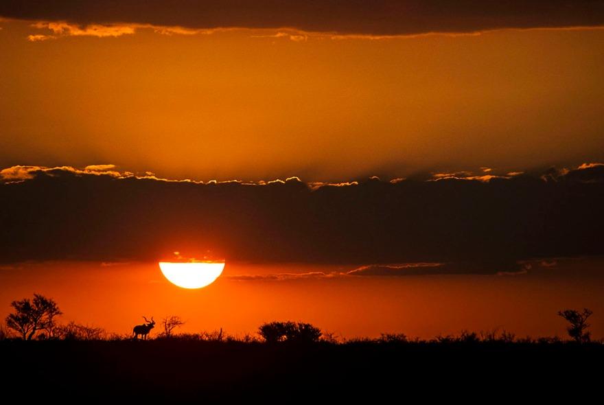 Great Kudu, Sunset, Namibia, Africa.